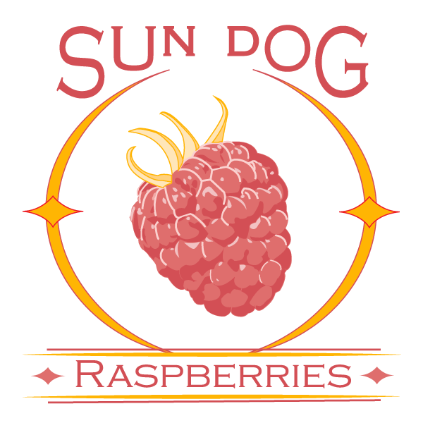 Logo for the company Sun Dog Raspberries. Features a raspberry in the center of a circular sun flare known as a sun dog.